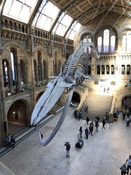 Natural History Museum: Urzeit-Riesen überall.